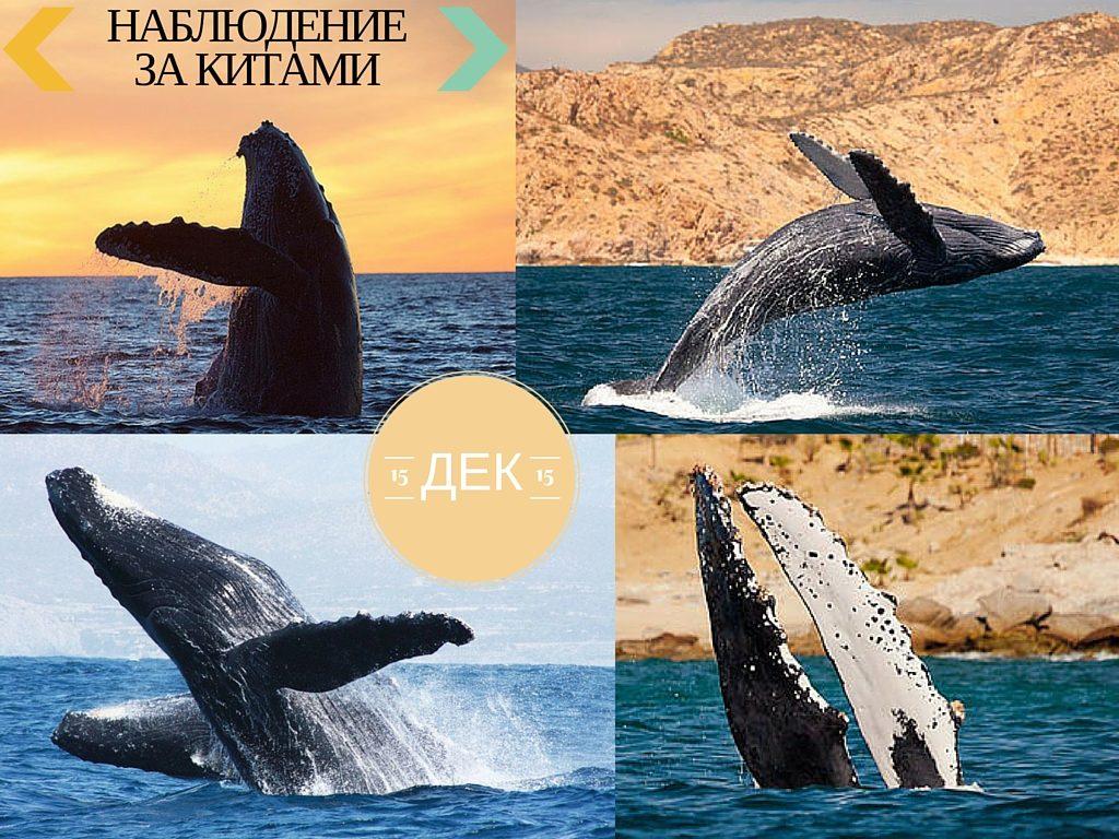 Наблюдение за китами, Мексика фото