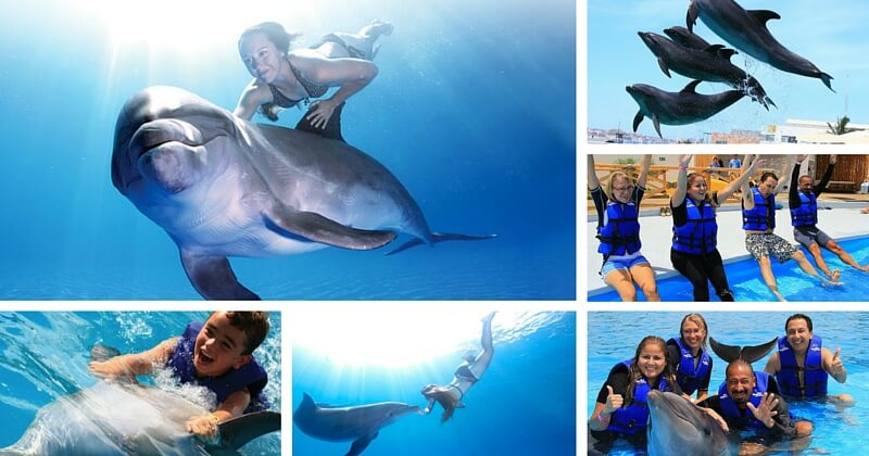 Плавание с Дельфинами в Лос Кабосе