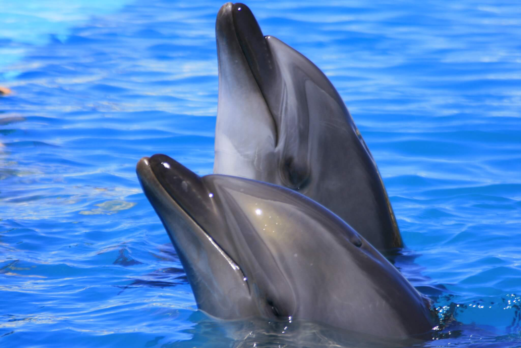 Dolphin Always!