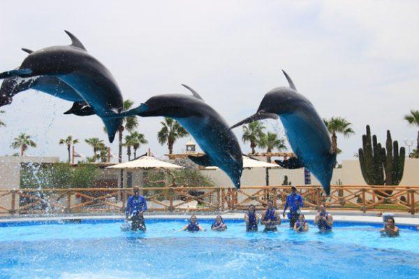 Плавание с Дельфинами в Кабо Сан Лукас Мексика