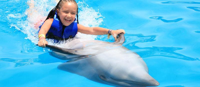 Плавание с Дельфинами в Лос Кабос
