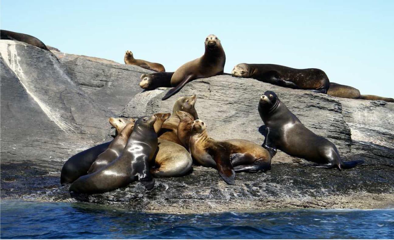 Фото морские львы в Мексике