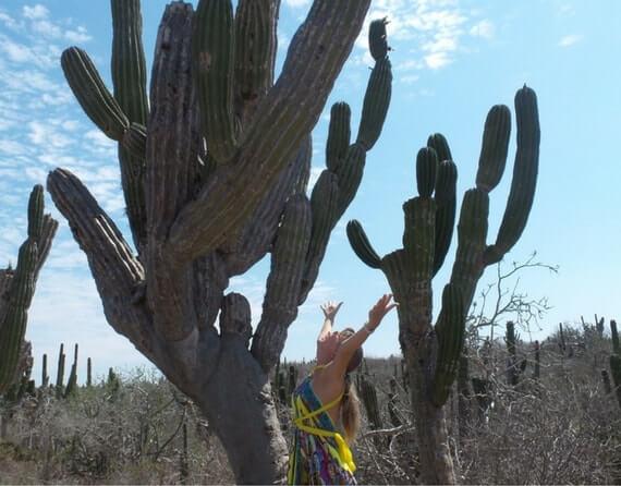 Кактус в Мексике