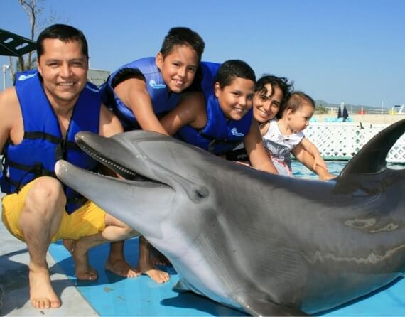 фото дельфины Сан Хосе Дель Кабо