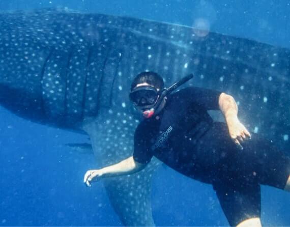фото плавание с китовой акулой
