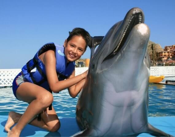 плавание с дельфинами в Мексике фото