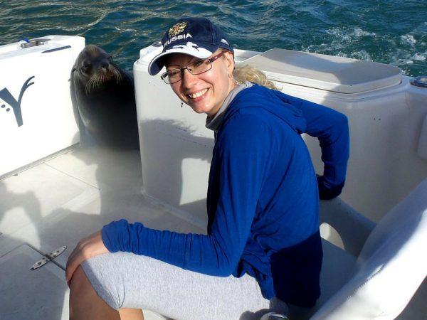 Морской котик в Лос Кабос
