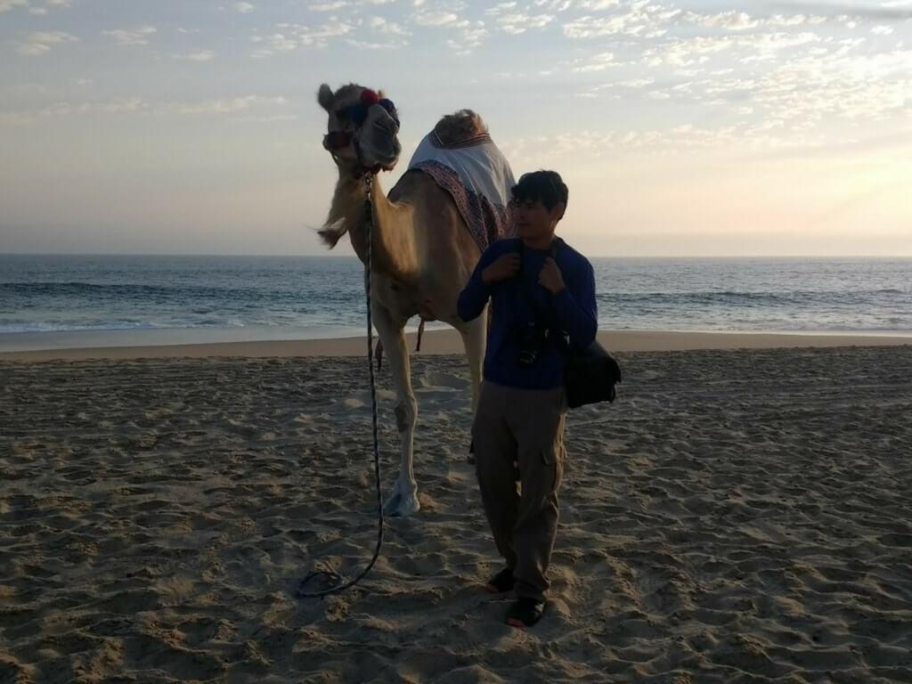 Тур на верблюдах картинка