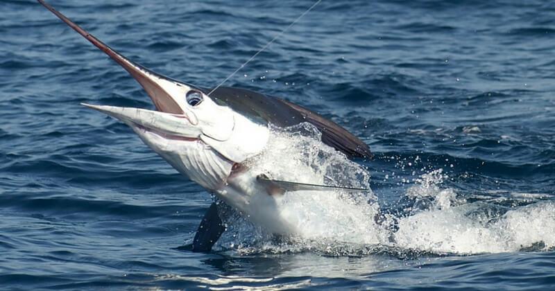 фото Турнир по рыбалке на Марлина